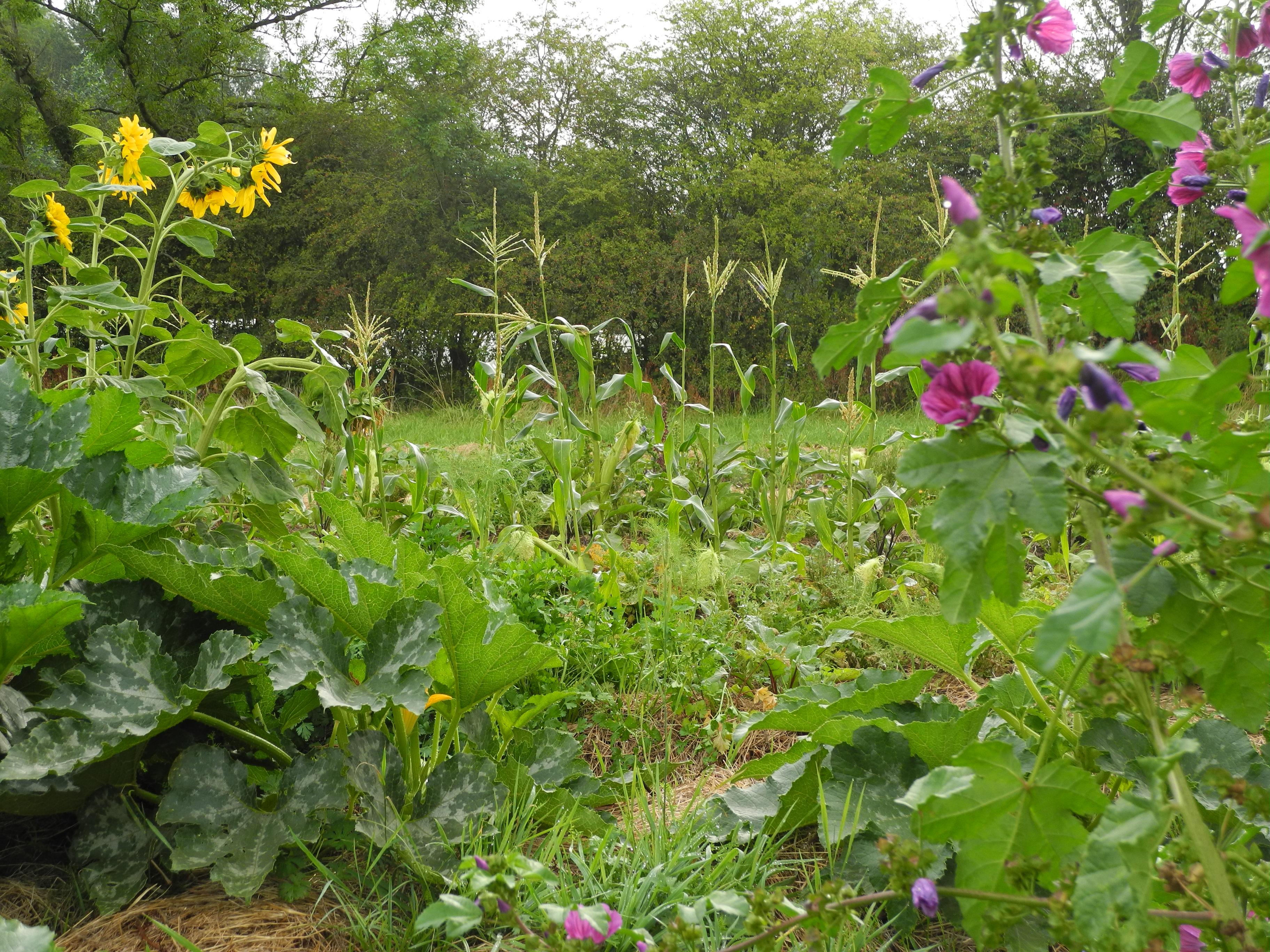jungle fleur